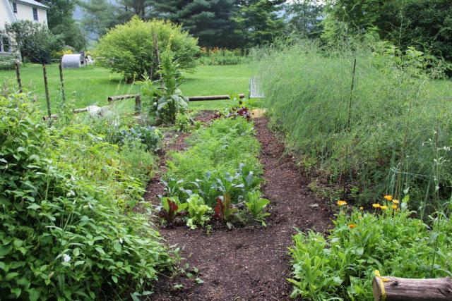 Potatoes, beans, St. Johns wort, onions, roses, kale. Photo: Cassandra Corcoran