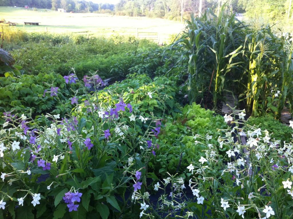 garden7-30-13 001