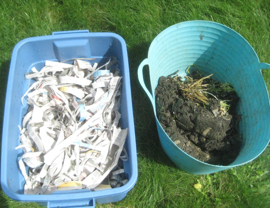 Clean bin filled with more ripped newspaper beside mix of worms and old muck - which should not be this wet. (photo: Lucy Martin)