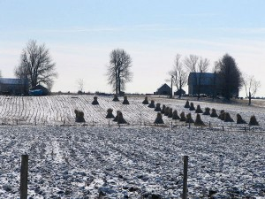 Amish farm near Heuvelton. Photo: Karen Johnson Weiner