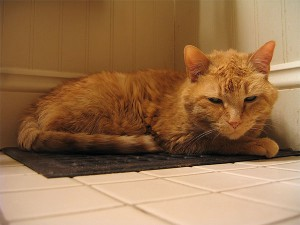 Cat on heat vent. Photo: kidmissile, Creative Commons, some rights reserved