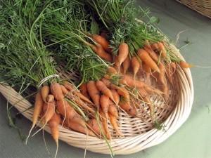 The last carrots. Photo: potsdamphotoguy