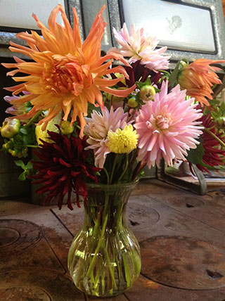 A dahlia sampler picked in anticipation of frost. Photo: Louise Scarlett