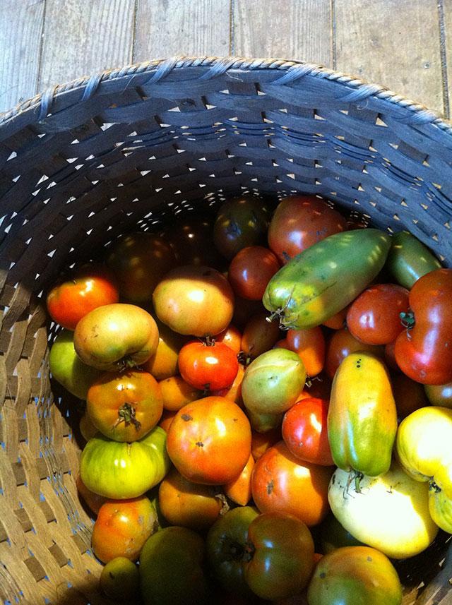 tomatoesinbasket