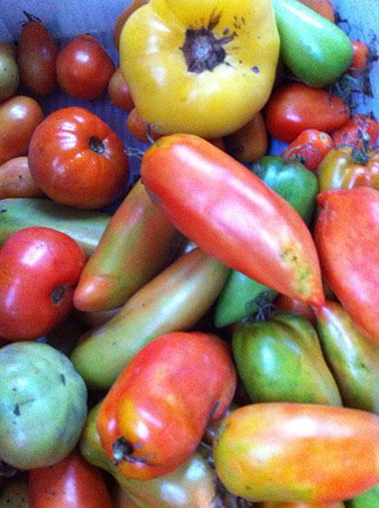 tomatoesmixedripe
