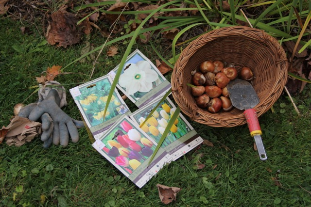 Looking ahead to spring: planting bulbs. Photo: Cassandra Corcoran