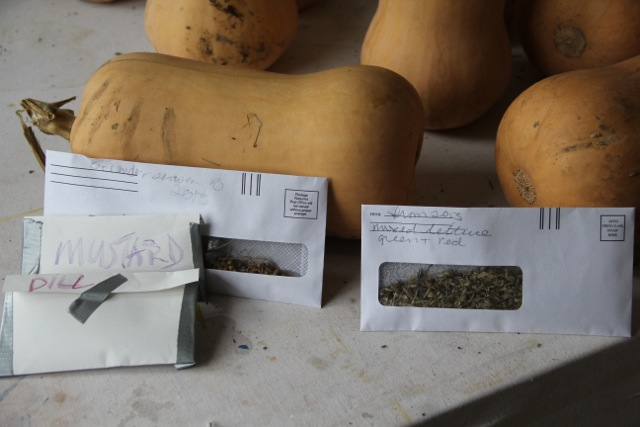 Butternut squash and seed for next year. Photo: Cassandra Corcoran