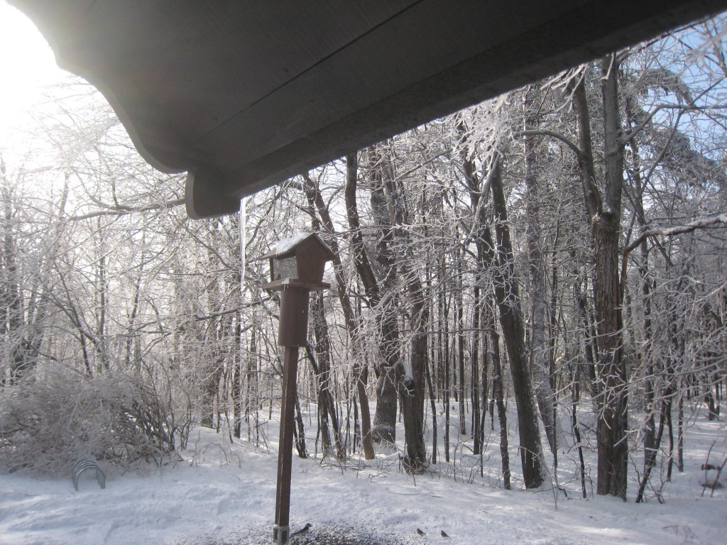 A bird feeder at Huron Cabin in Gatineau Park. Photo: Craig Miller