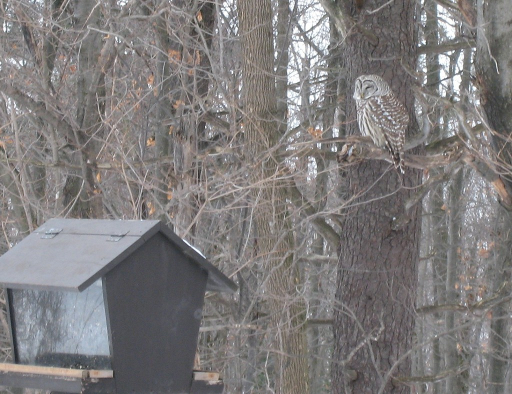 Owl and bird feeder at Huron Cabin. Photo: Craig Miller