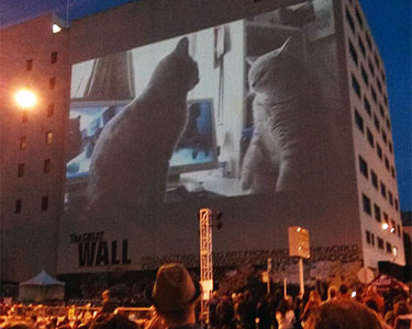 An Internet Cat Video Festival in Oakland, CA. Photo: Mark Hogan, Creative Commons, some rights reserved