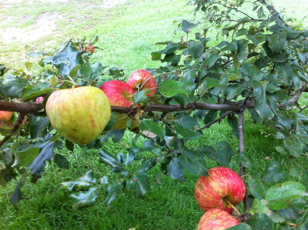 Apples: no plastic packaging or artificial ingredients required. Photo: Ellen Rocco