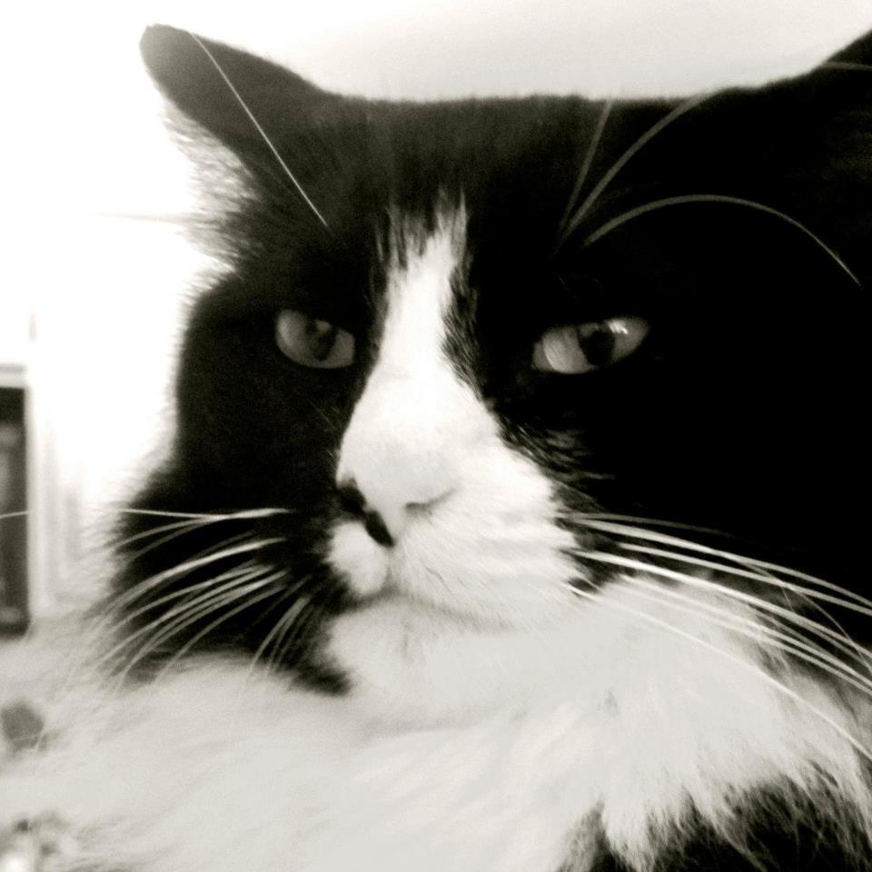 Henri, Le Chat Noir. Photo via Facebook