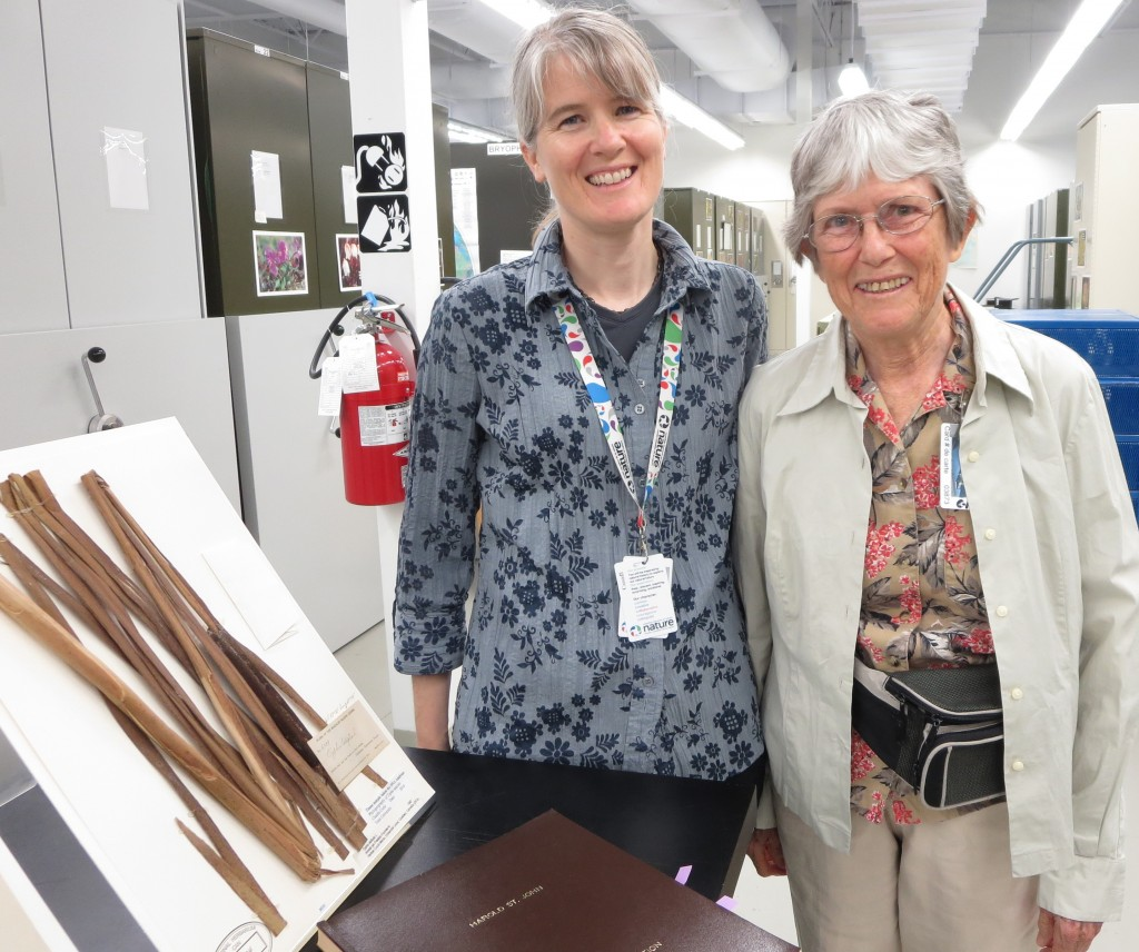 Jennifer Doubt, the curator of National Herbarium of Canada showing Martha St. John Martin specimens collected by Harold St. John nearly a century ago. Photo: Lucy Martin