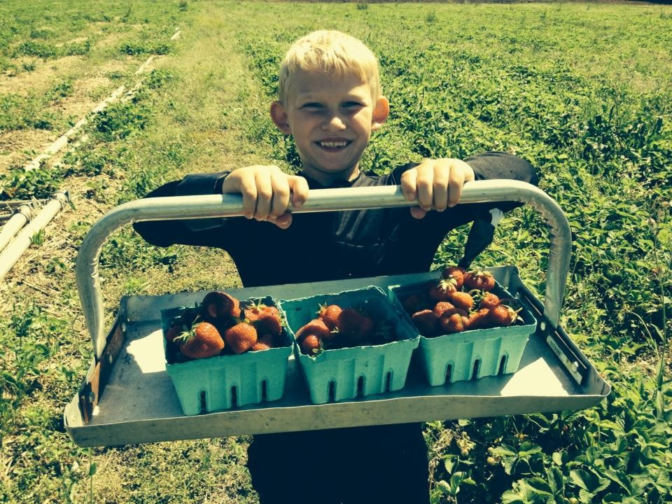 Peyton Worden with the berries he picked at Merkley's Farm in Ogdensburg. Photo: Kristin Worden