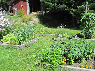 A Schroon Lake garden in July. Photo: Helene Vanderburgh