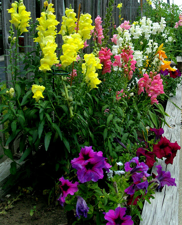 Nursing home flower box. Photo: George DeChant