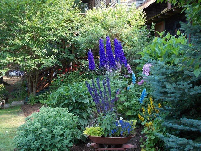 Another garden at The Hedges (in front of the dining room) in Blue Mountain Lake. Photo and garden: Viriginia Jennings