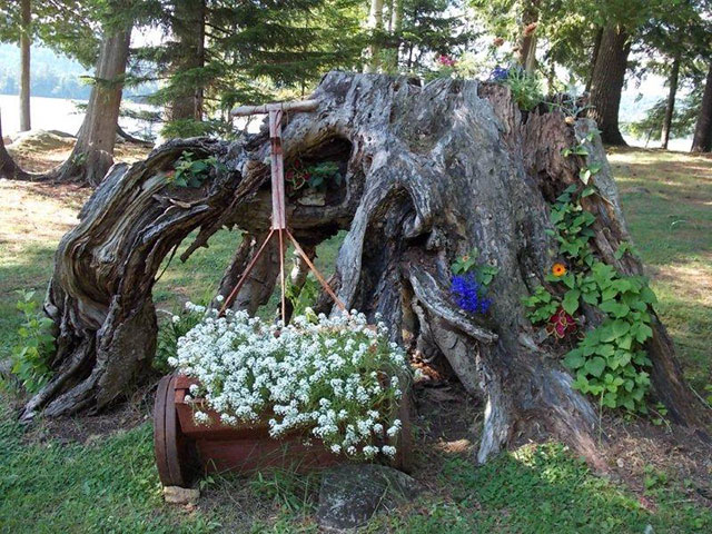 The stump garden, featuring delphiniums (over 6 feet tall), sedum, bee balm, at The Hedges in Blue Mountain Lake. Photo (and garden): Virginia Jennings.