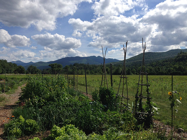 Keene Community Garden. Photo: Sarah Prince