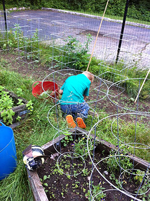 Youngster weeding school garden. Photo: Becky Bradt
