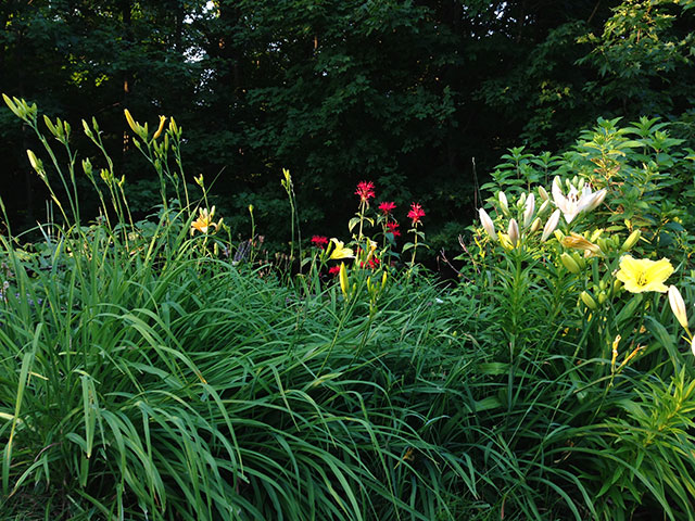 Lilies and bee balm. Photo: Martha Foley