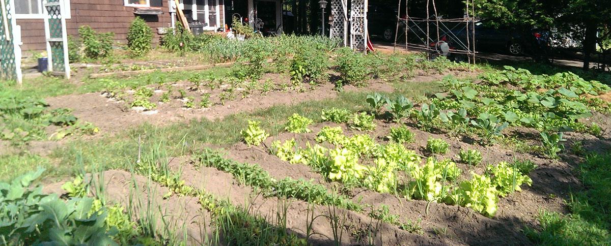 The Rudd garden in Potsdam. Photo: Jim Rudd