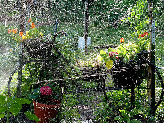 """Garden Shower,"" watering nasturtiums, peas, beans, kale, spinach and lettuce. Photo: Tracy Santagate"