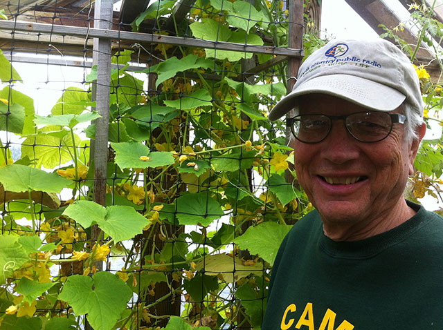 Proud farmer. Jeffrey in front of the cuke trellis. (Note the cap.) Photo: Ellen Rocco