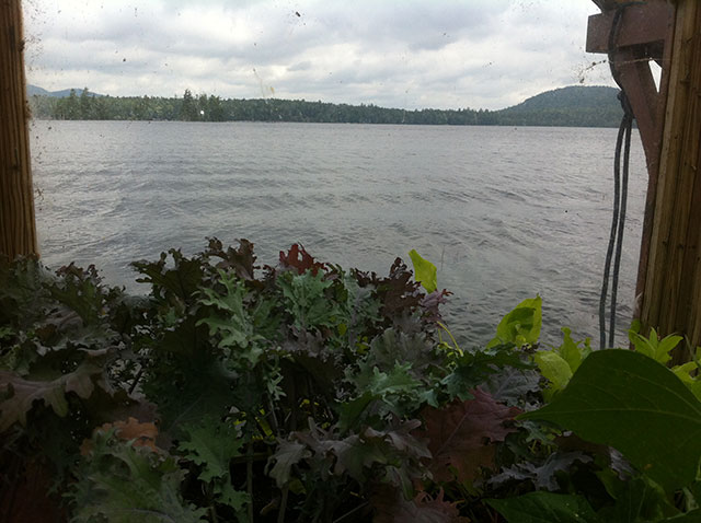 The view of Raquette Lake over the purple kale. Photo: Ellen Rocco