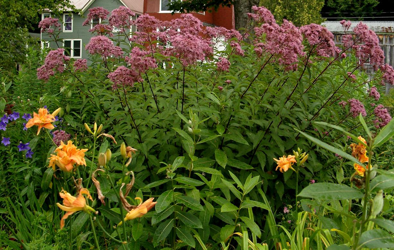 Garden along the Saranac River Walk. Photo: George DeChant