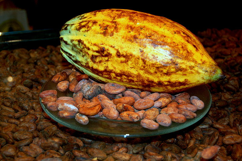 Where it starts: cocoa fruit with cocoa beans. Image by Mininus, Creative Commons