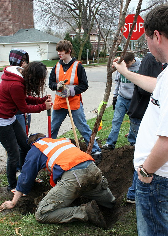 """Volunteers planting a tree for Arbor Day in Rochester, Minnesota. Photo: A href=""""http://en.wikipedia.org/wiki/File:ArborDay2009treeplanters.JPG"""">Jonathunder, Creative Commons, some rights reserved"""