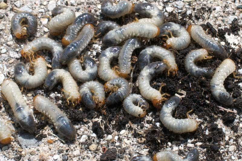 """""""Grumble, grumble. Grubs again."""" Photo: JB, Creative Commons, some rights reserved"""