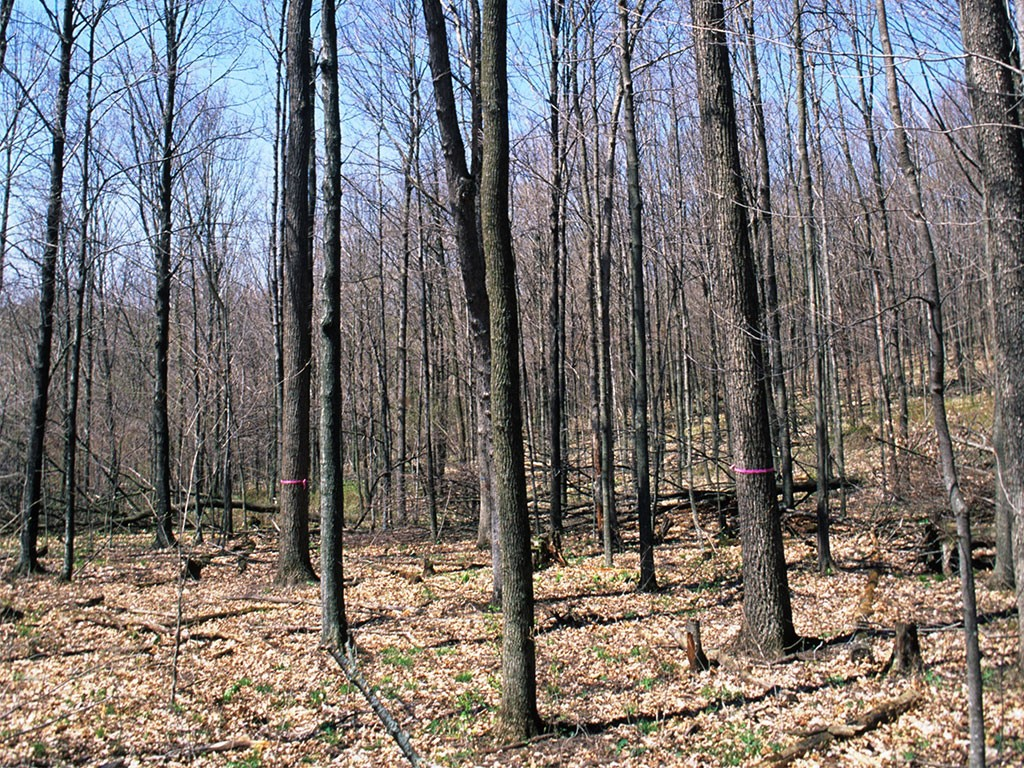 Woodlot with trees marked for harvest. Photo: Wisconsin Dept. of Natural Resources, Creative Commons, some rights reserved