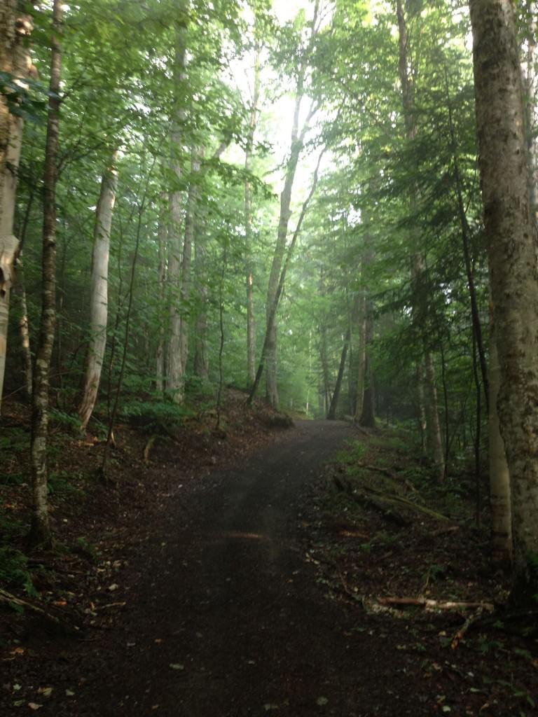 Henry's Woods in mist