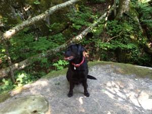 Ziggy Henry's Woods