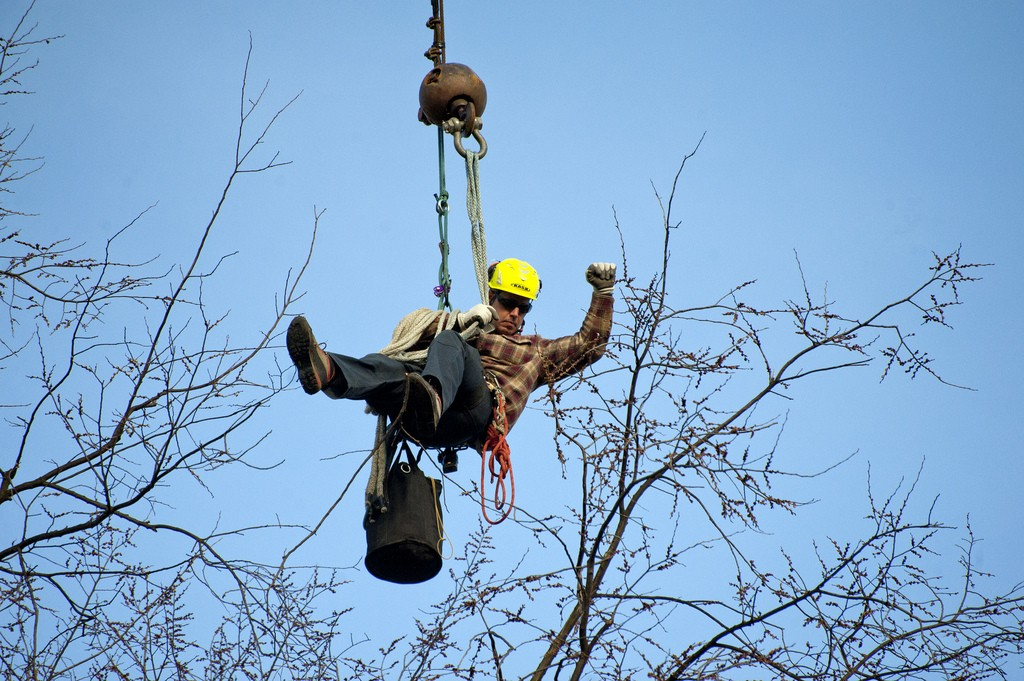 An arborist, just hanging out. Photo: Penn State, Creative Commons, some rights reserved