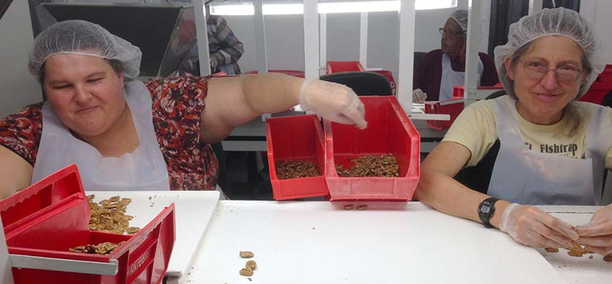 Tina and Betsy on the pecan sorting line.