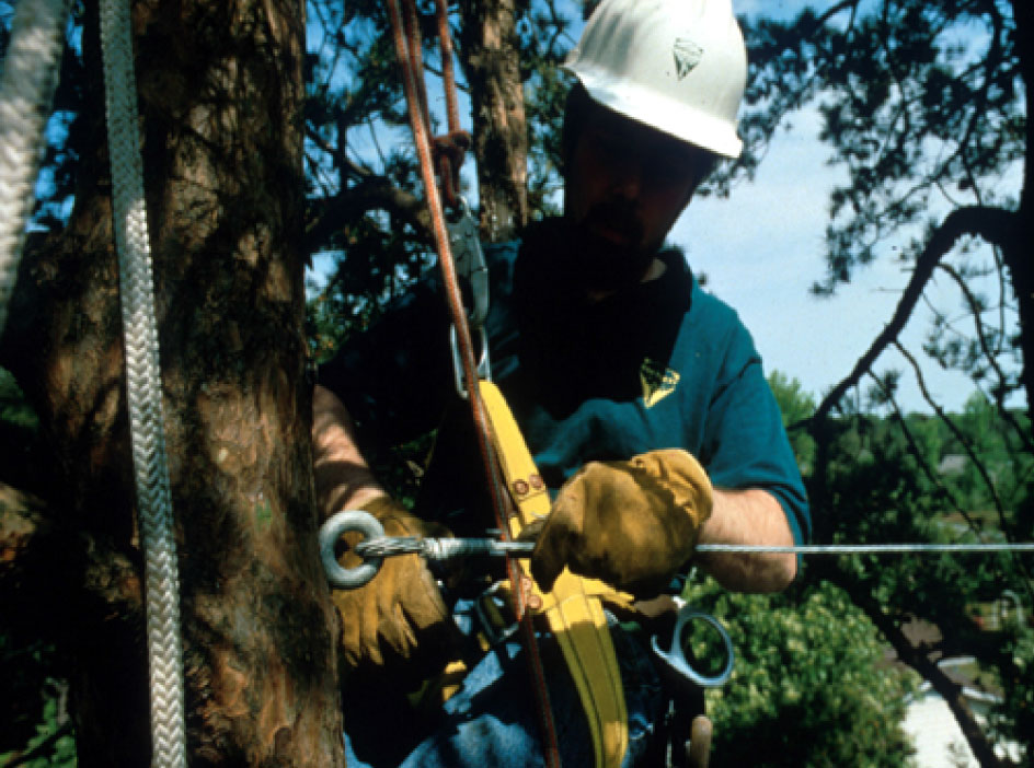 But cabling trees is complex and may not be a DIY activity. The solution may require a certified arborist. Photo: Purdue University
