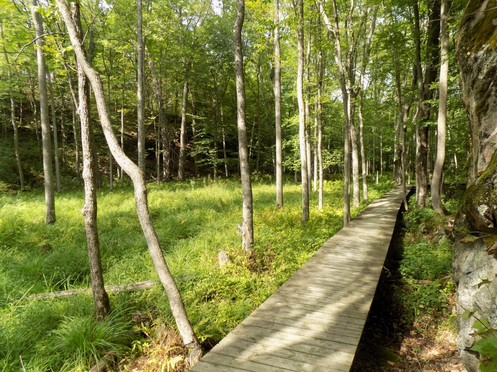 The short Arab Lake Gorge Trail gives park visitors a good introduction to Frontenac Provincial Park.  Photo by James Morgan