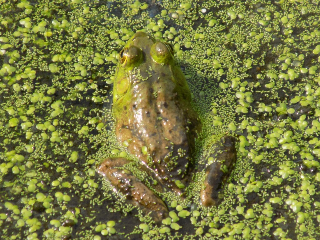 It's easy being green in the wetland through the Arab Lake Gorge.  Photo by James Morgan