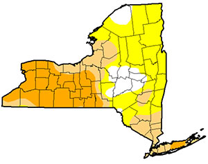 Drought monitor map for New York on July 26, 2016. Yellow is abnormally fry, tan is moderate drought, orange is severe drought. Map: USDA