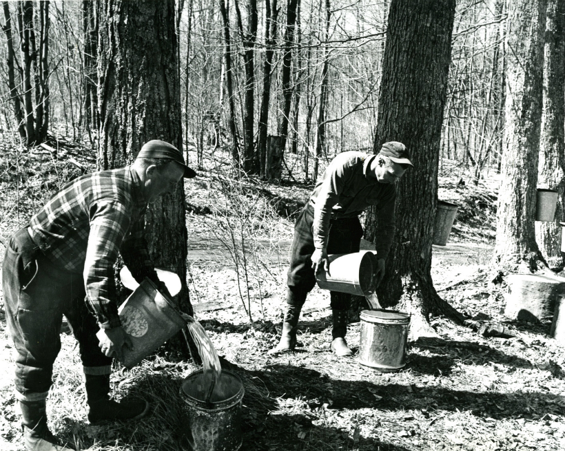 Image of two men transferring sap from collecting buckets to other buckets. P: James Fynmore. 1965.
