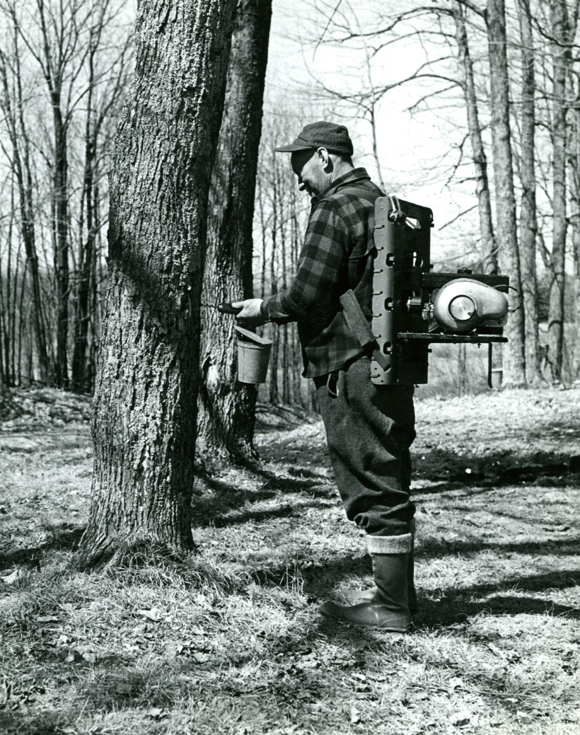 Man with a gas powered drill mounted to a Backpack.  He is drilling taps for sap collecting for maple sugar. Photo: James Fynmore. 1965.