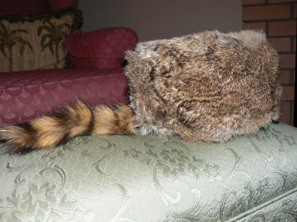 "Mom's coonskin cap, a gift from ""BIG SANTA"" on Christmas, 1987.  Photo: Dodi Morgan"