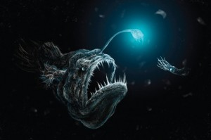Anglerfish. Drawing: Matt Danko, Creative Commons, some rights reserved