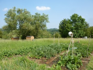 "The ""Three Sisters,"" corn squash and beans, are planted in the lower right of this garden plot. Photo: Christian Guthier, Creative Commons, some rights reserved"