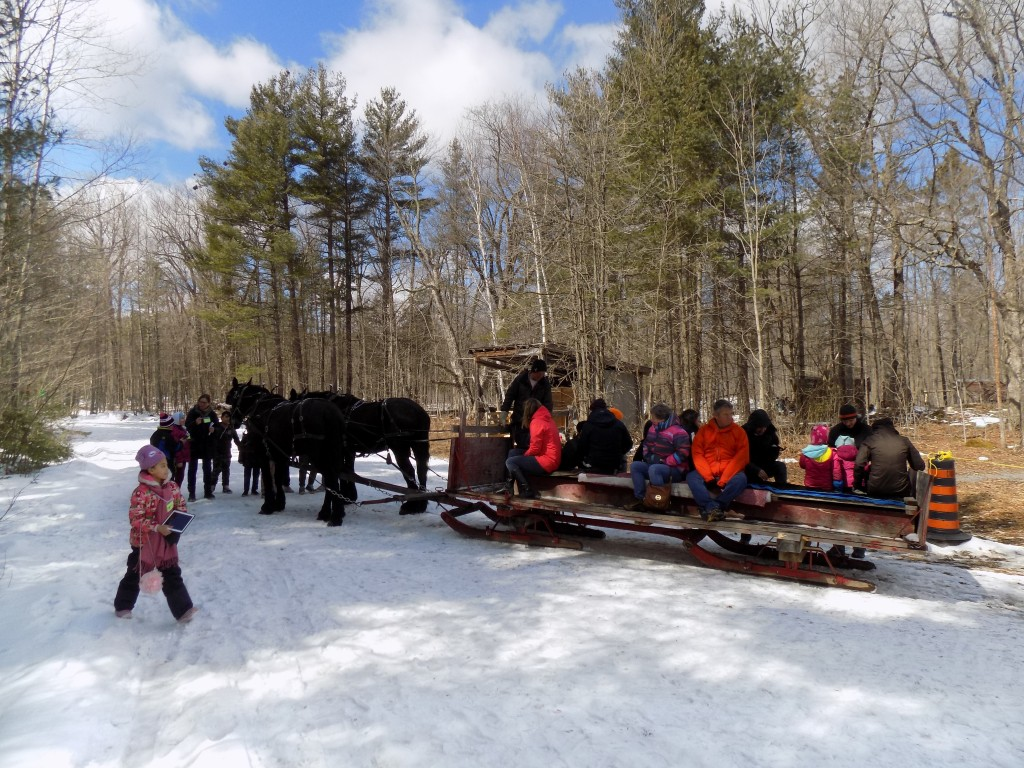 There was still enough snow in the woods for horse-drawn sleigh rides at Fulton's on Maple Weekend.  Photo: James Morgan
