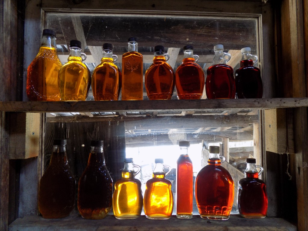 Different shades of maple syrup in the Shanty Men sugar house window.  Photo: James Morgan