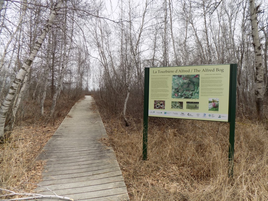 The Alfred Bog is going to become an Ontario provincial park.